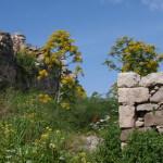 Aegina in het voorjaar